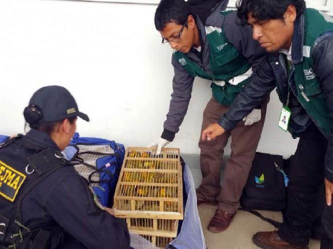 (Foto: Info región Perú)
