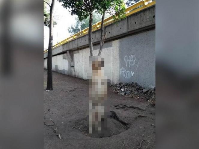 Busca PGJ a responsables de agresión a perro en Churubusco