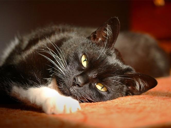 Mata a un gato en la lavadora y lo comparte en Instagram