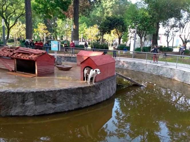 Jauría mata a 16 patos de la Alameda de Toluca