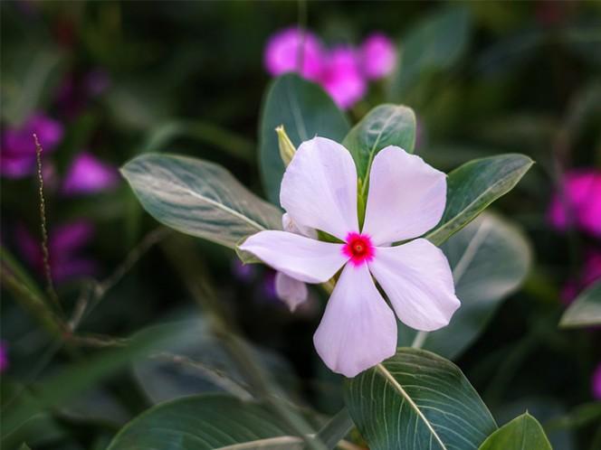 Cáncer de mama, Salud, Ciencia, Reino Unido, Mejor vivir, Buenas Noticias, Flor, Descubrimiento, Madagascar, Cáncer