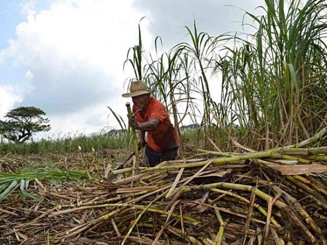 Cofece investiga mercado de azúcar por posibles 'trampas'