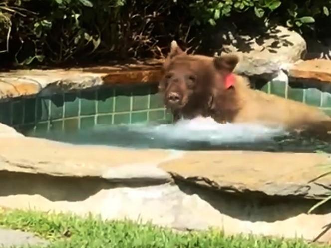 Un oso disfruta de un sensual baño en un jacuzzi