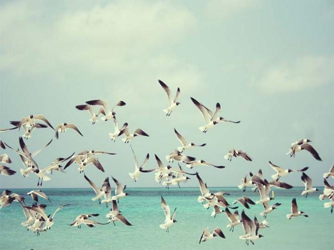 Alerta en Inglaterra por gaviotas ebrias en las playas