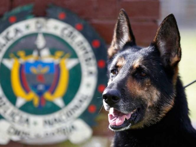 La perra Sombra, el animal más buscado por los narcos colombianos