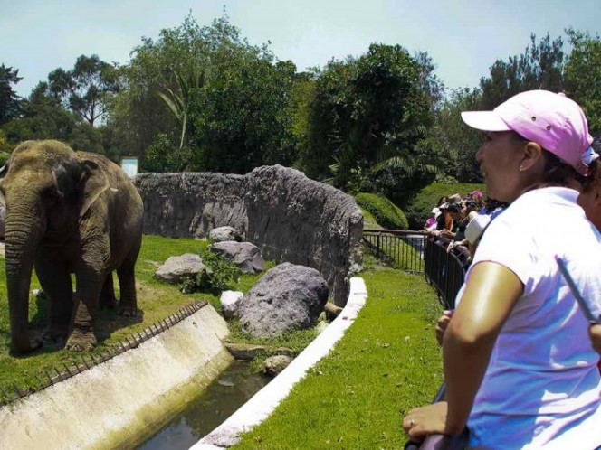Gen & zombie & # 39; protects elephants from cancer