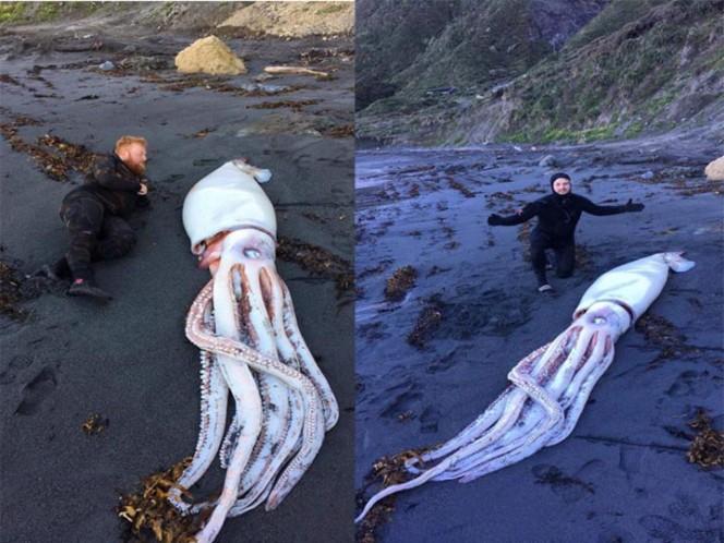 Encuentran calamar gigante en playa de Nueva Zelanda