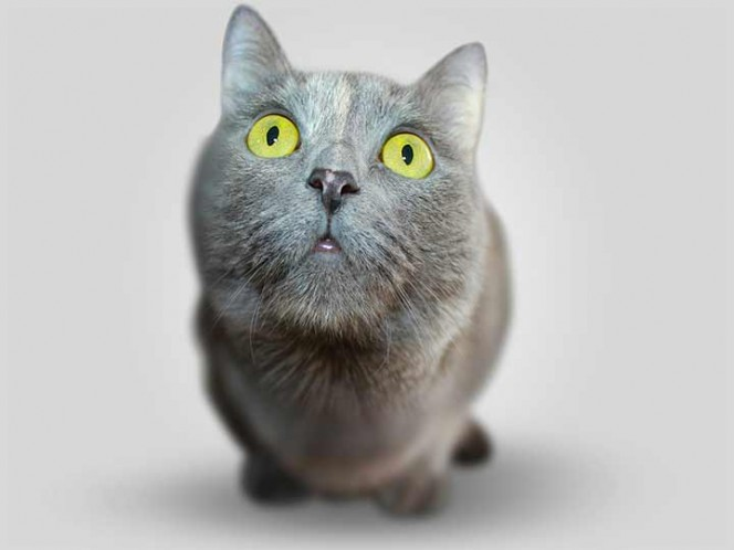 Gatito lleva a casa de su amo bolsa repleta de drogas