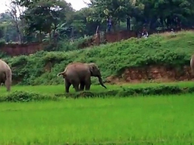 Mundo Web: Un niño muere aplastado por un elefante en la India