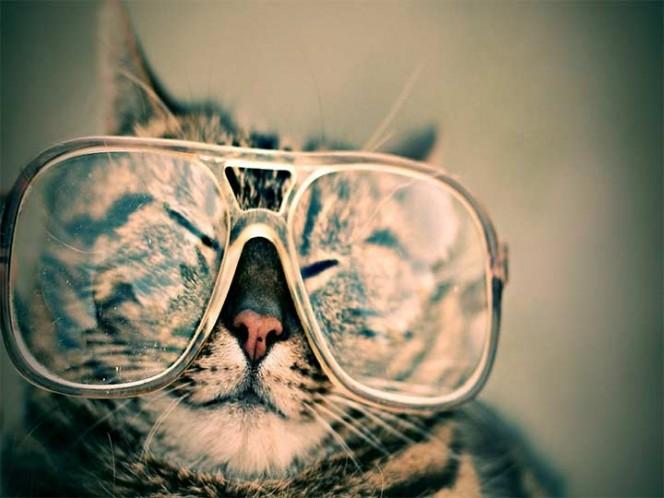 Departamento de Estado en EU envía por error correos con gatitos