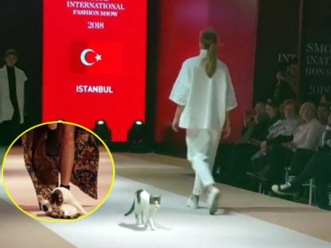 Gato se cuela en desfile y acapara las miradas de los asistentes
