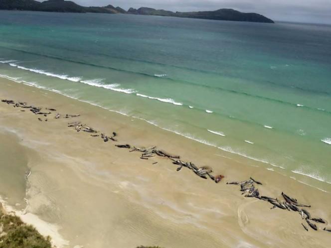 Más de 140 ballenas piloto se quedan varadas en Nueva Zelanda