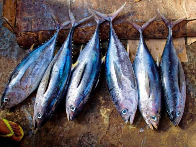 Luego de 10 años México pierde ante EU por etiquetado de atún