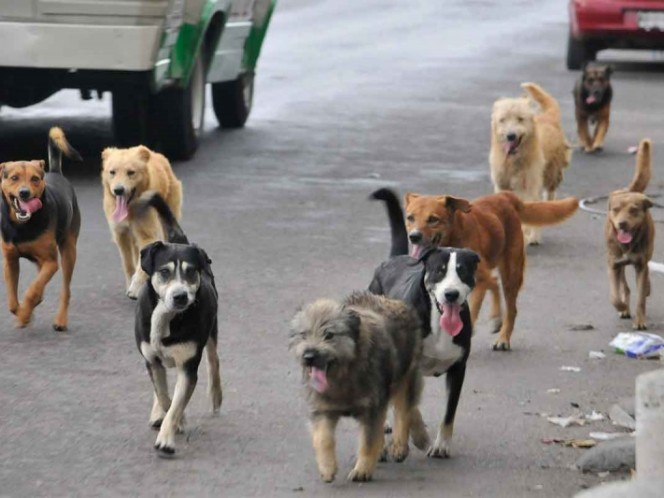 Legalizan matar perros callejeros que 'impidan el libre tránsito'