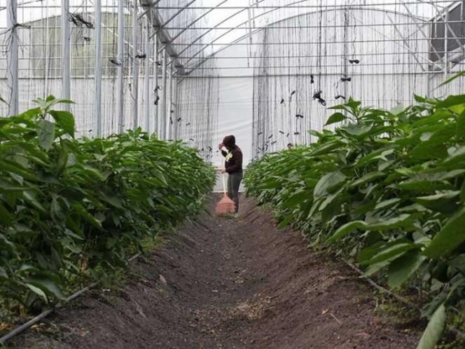 México es cuarto lugar mundial en producción de alimentos orgánicos