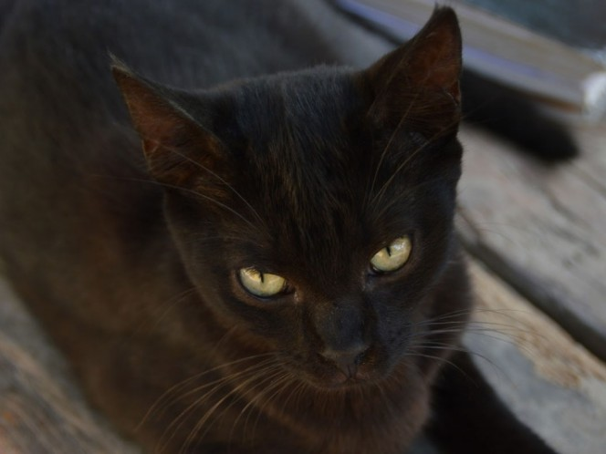 Three cats are diagnosed with black death in Wyoming, USA