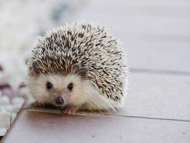 Do not kiss the hedgehogs: #United government after infection outbreak