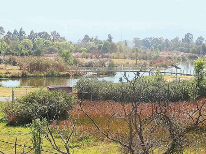 El Parque Ecológico de Xochimilco fue declarado Parque Nacional en 1984. Hoy luce descuidado y no ofrece actividades. Fotos: David Solís