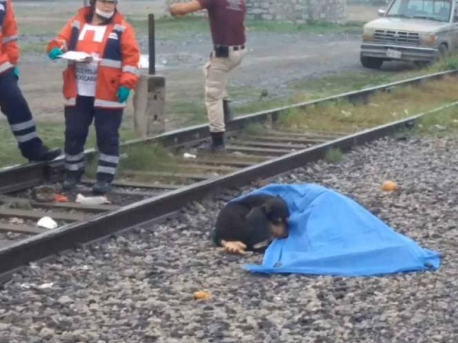 Perrito se niega a abandonar a su dueño, arrollado por tren