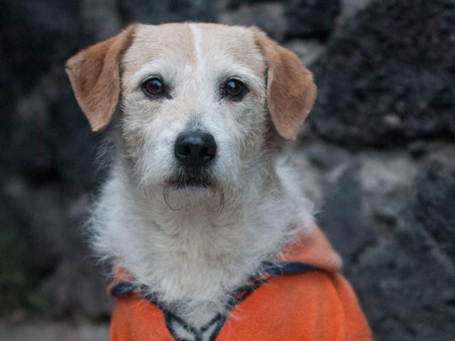 Perros pueden detectar con precisión el cáncer en la sangre: estudio