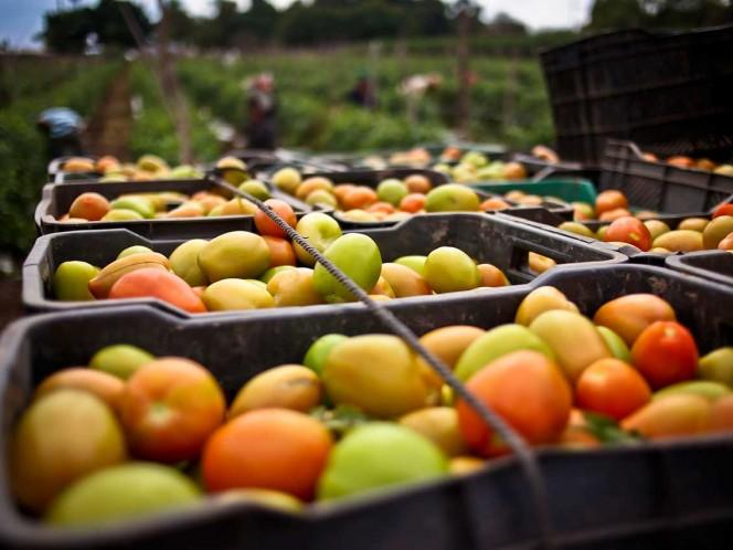 Decepciona a México cancelación de acuerdo para exportar tomate a EUA