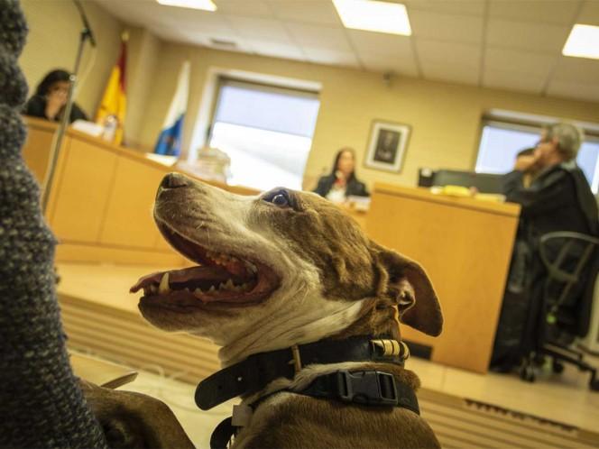 Una perra asiste como testigo por maltrato en un juicio en España