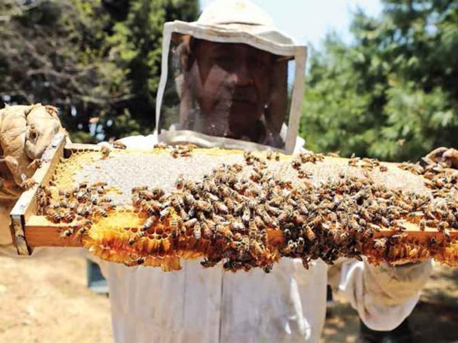 Apocalipsis por menos abejas; advierten de la muerte de colonias