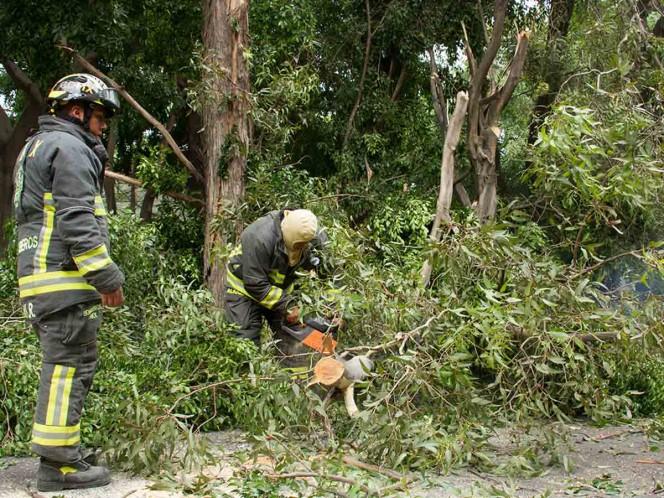 Fuerte lluvia deja árboles, ramas y banderas caídas en CDMX