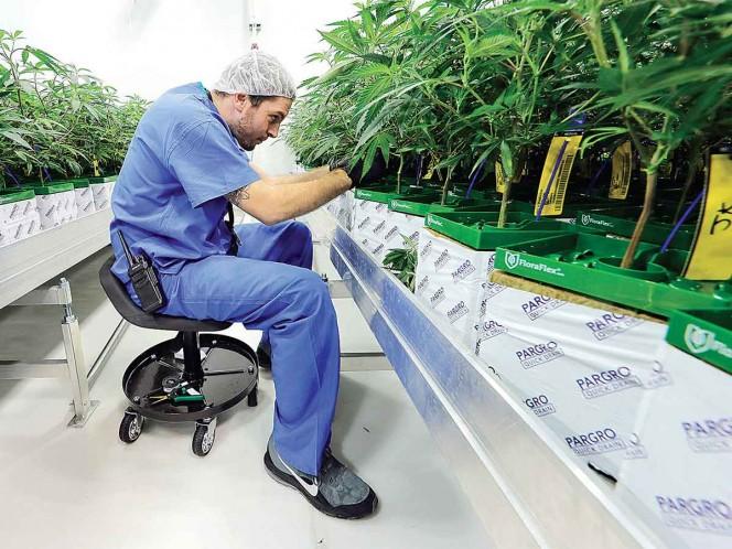 cannabis-medicinal-gana-terreno-legalizan-la-venta-en-luisiana