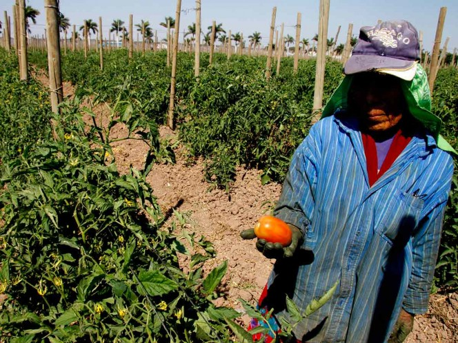AMLO celebra retiro de aranceles a jitomate y alza en inversión extranjera