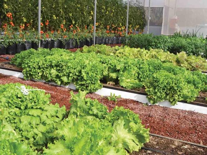 Fincas verticales serán futuro alimenticio en Latinoamérica: NASA