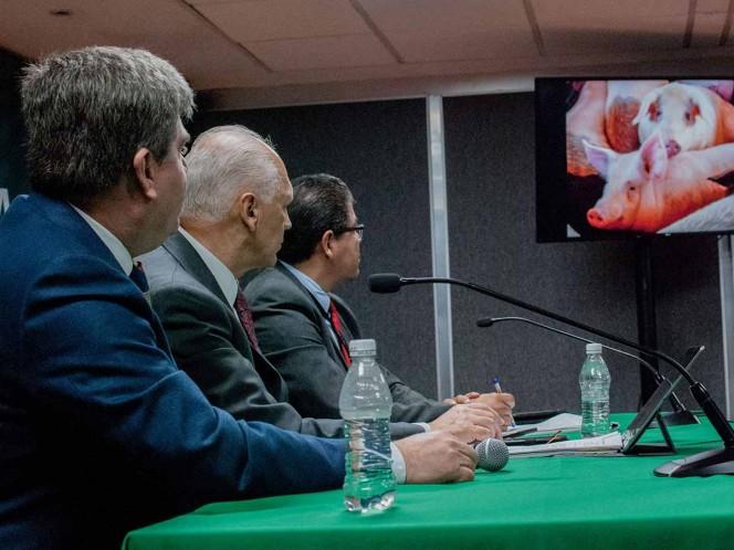 México se prepara para ataque biológico de peste porcina