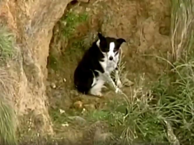 Jimmy, el perrito rescatado tras un calvario de tres horas