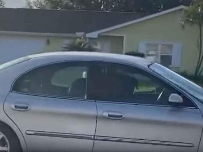 Perro da vueltas solo en un auto