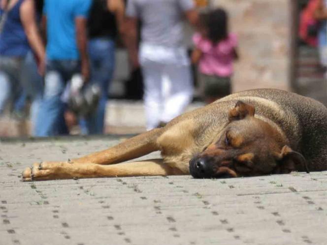 Peregrinos abandonan a 29 perritos cerca de la Basílica