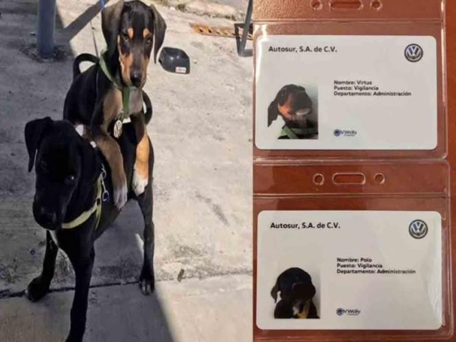 Volkswagen contrata a 2 tiernos cachorritos abandonados