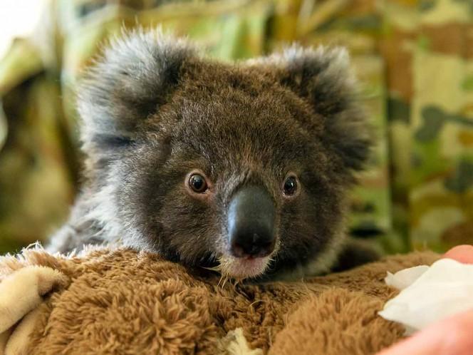 1.000 millones de animales muertos por incendios en Australia