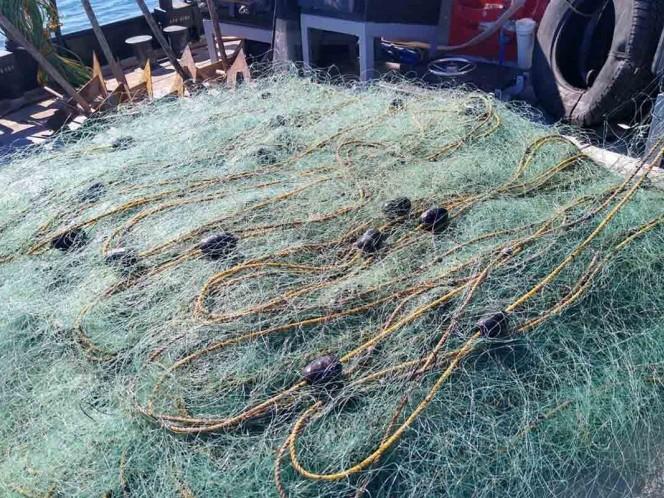 Arrancan 11 redes totoaberas del hábitat de la vaquita marina