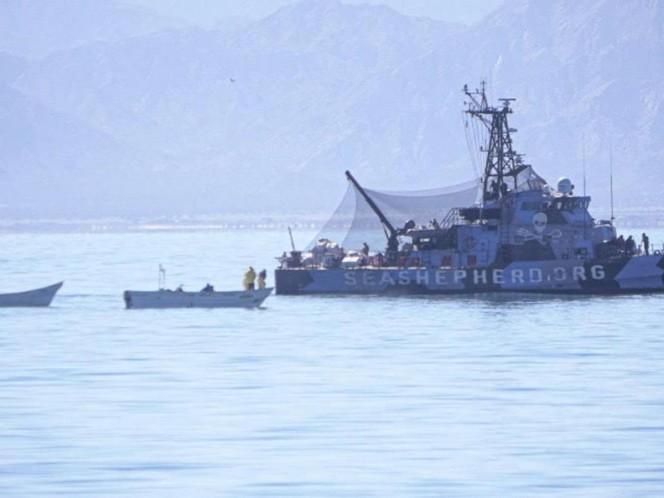 Pescadores furtivos atacan a balazos barco en hábitat de vaquita marina