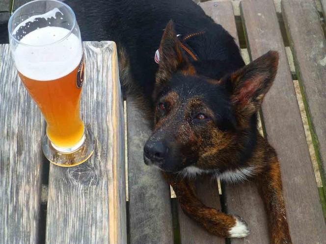 Regalan 3 meses de cerveza a quienes adopten perros durante la cuarentena