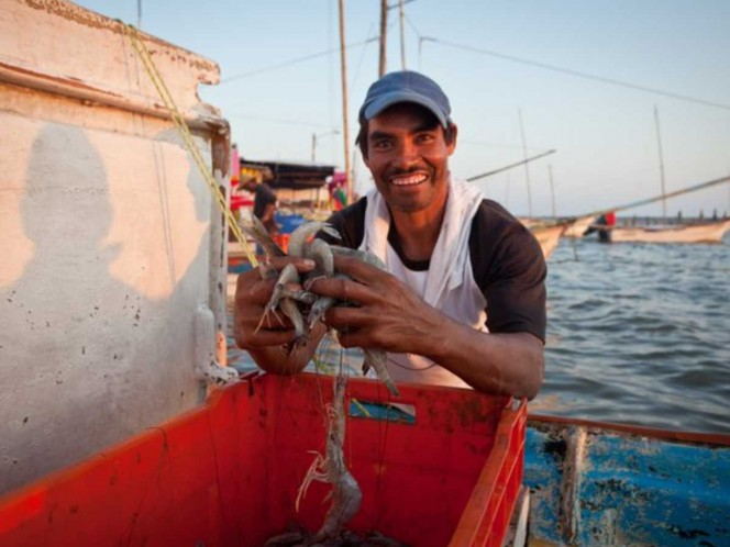 La importancia de la pesca ribereña es tal, que dos de cada cinco pescados y mariscos que llegan a la mesa de los mexicanos provienen de esta actividad, que se desarrolla en pequeñas embarcaciones conocidas como pangas o a la orilla de la playa.