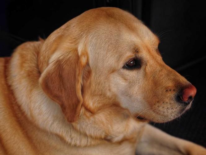 Inseparables, perro fallece el mismo día que su dueño