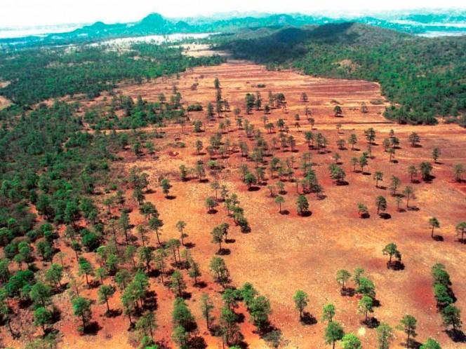 Deforestación, Bosques,  Áreas verdes, Ambiente, Hectáreas, Áreas naturales, FRA, FAO, ONU, Carbono CO2, Contaminación, Tala ilegal, Incendio forestal, Agenda 2030