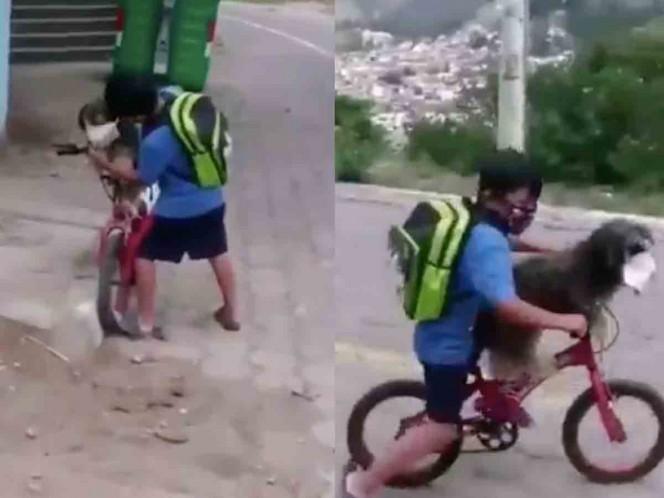 Niño protege a su perrito del Covid-19 con un cubrebocas — Viral
