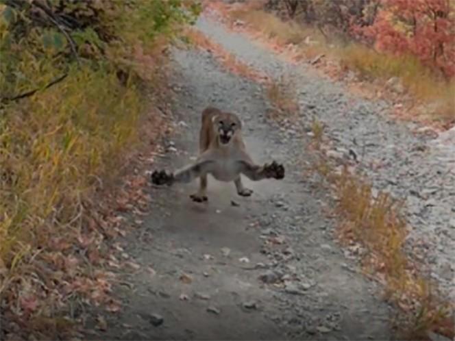 Puma intenta atacar al hombre durante la excursión;  el video es viral