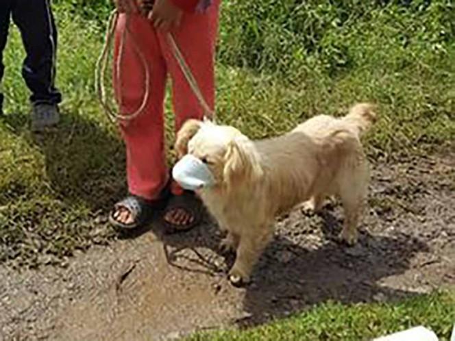 Perrito acude a vacunarse con cubrebocas y se hace viral