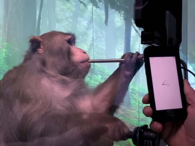 Neuralink coloca chip en cerebro de mono y lo ponen a jugar videojuegos