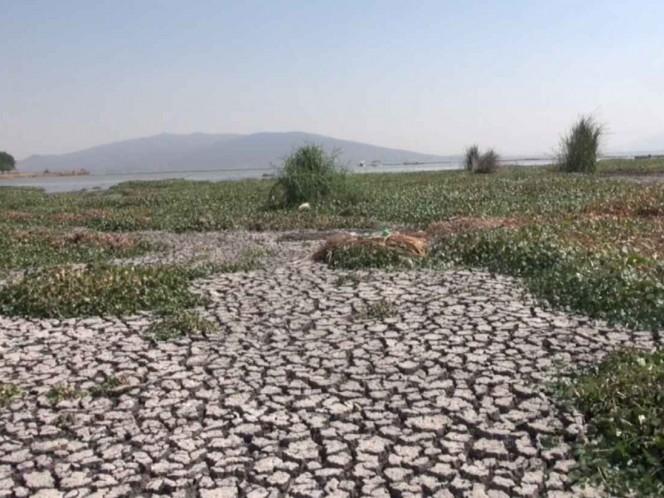 Sequía afecta laguna en Guanajuato y deja sin mojarras a pescadores