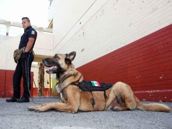 Jubilan a 'Capo', perro policía de Ecatepec; podrías adoptarlo