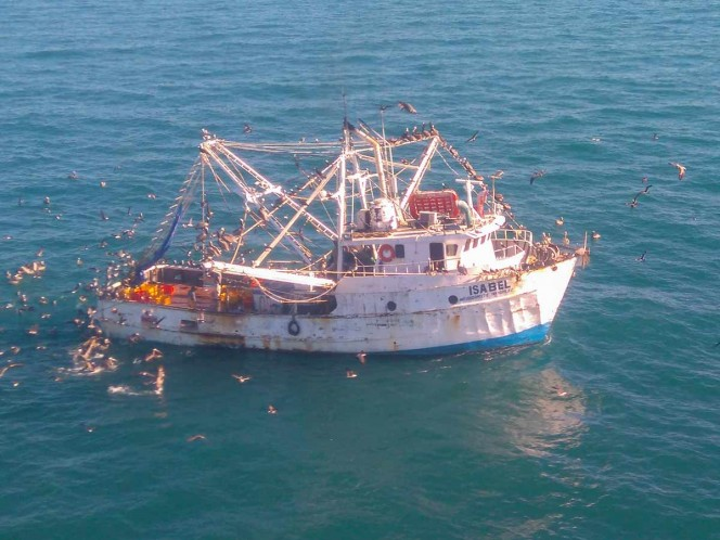 Pescadores amenazan con regresar a hábitat de vaquita marina